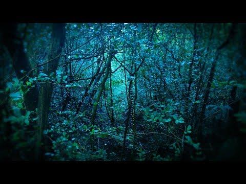 Rain in Forest White Noise | Sleep, Study, Focus | 10 Hours Rainstorm