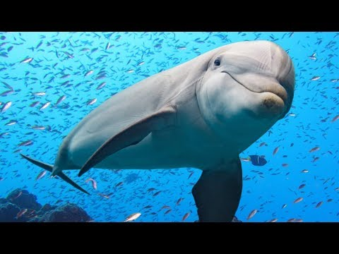 The Majestic World of Dolphins