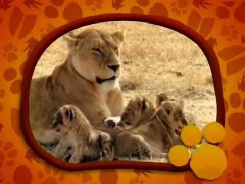 Λιοντάρια- O μαγικός κόσμος των ζώων