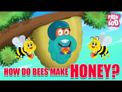 How Do Bees Make Honey? - The Dr. Binocs Show   Best Learning Videos For Kids   Peekaboo Kidz